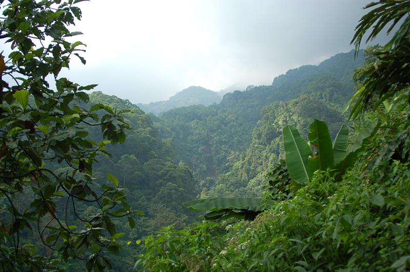 forest-near-mount-salak