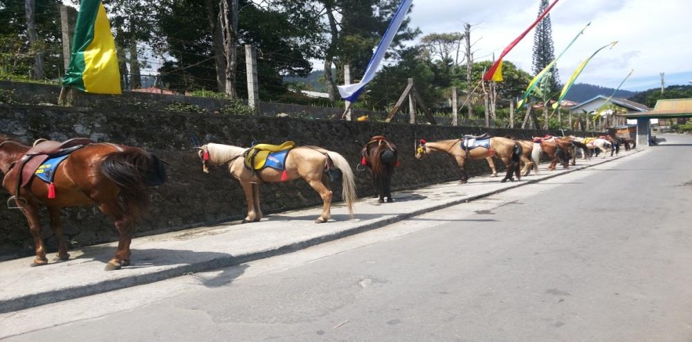 Kuda di Tawangmangu.jpg